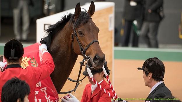 Photos: バウンスシャッセ「なんだか、みなさん、私のこと半分忘れてるでしょう?」【150315中山11R中山牝馬S】 #見つめうま