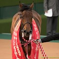 Photos: バウンスシャッセ「別にやさぐれてないですけどね~」【150315中山11R中山牝馬S】 #見つめうま