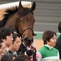 Photos: バウンスシャッセ「やさぐれてないってば、クールなだけよ私は」【150315中山11R中山牝馬S】 #見つめうま