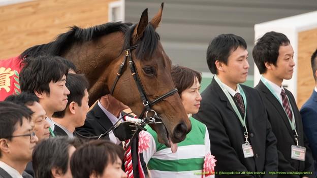 バウンスシャッセ「ほら、みなさんおっかない顔してるからリラックスさせなきゃ」【150315中山11R中山牝馬S】 #ペロリ馬