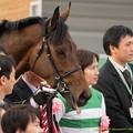 Photos: バウンスシャッセ「ほら、みなさんおっかない顔してるからリラックスさせなきゃ」【150315中山11R中山牝馬S】 #ペロリ馬