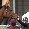 Photos: バウンスシャッセ「いやだ、照れるじゃない(笑)~(ペタペタ」【150315中山11R中山牝馬S】