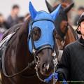 (12)シャイニープリンス「20戦目ではじめての1番人気…」おやっさん「他馬の単勝しこたま買ってきてくれよ」【150315中山10R東風S】
