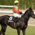 コウヨウアレス(柴田善)「かわいい牝馬ちゃんに注目されるように頑張ります」柴田善「…」【150315中山10R東風S】