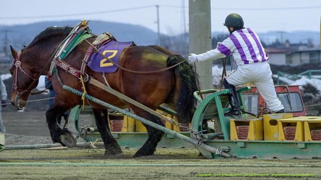 2006年旭川でデビューしたホッカイヒカル、競走馬生最後となる271戦目のゴールを切る【150322帯広10Rばんえい記念】 #banei #keiba