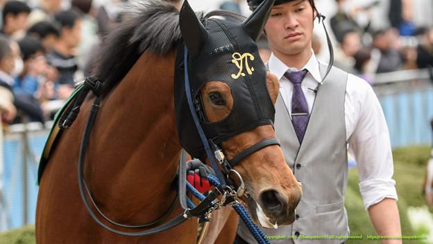 ?サンレイレーザー「なんか、あんまりみたことないお馬さんばっかりなんですけども…」【150329中山11RマーチS】