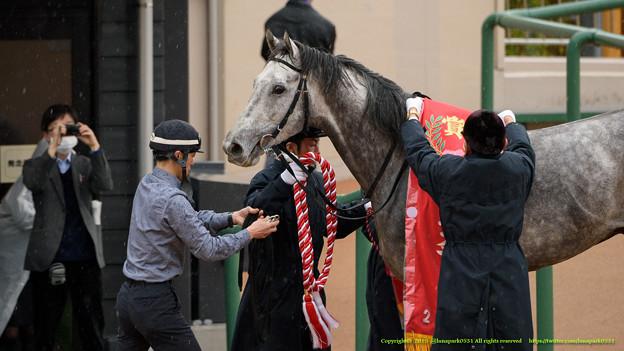 マイネルクロップ「おー、こっちからもあっちからも撮られてるね~」【150329中山11RマーチS】 #ジロリ馬