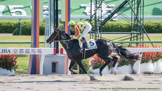 写真: マスクゾロ、先団から抜け出しほぼ1年ぶりの2勝目【141026京都7R】