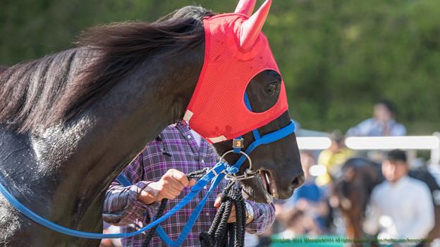 Photos: ?ウーマン「なでしこ賞っていっても女の子ばかりじゃないのね」【141026京都8Rなでしこ賞】 #ジロリ馬