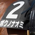 Photos: ボクノナオミ「どこ撮ってるのよ!」【141026京都8Rなでしこ賞】