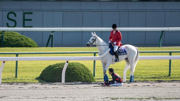 Photos: マイハッピークロス「幸さんダイジョブですか?」幸J「びっくりした~」【141026京都8Rなでしこ賞】