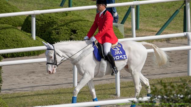 シロベエ「新馬戦で1.1倍ってすごい人気だね~」【141116京都6R新馬】