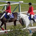 マイネルデスポット「一生に一度あるかないかだよね、単勝1倍台とか、ちなみにぼくは1.4倍で勝ったけど」マイハッピークロス「自慢かよ~」【141116京都6R新馬】