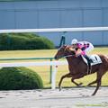 スマートグレイス、完全な独走でゴールに向かう【141116京都6R新馬】