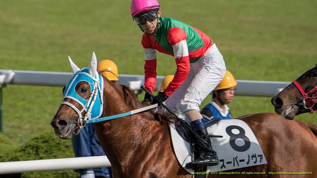 スーパーノヴァ「女の子強い、逆らえない」【141116京都6R新馬】