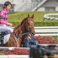 Photos: スマートグレイス「またたくさん人がいるわね~」【141116京都6R新馬】