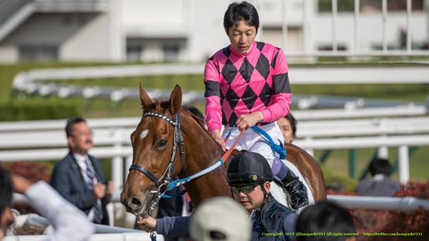 スマートグレイス「ユタカさんにペタペタしていただけるなんて嬉しいわね」【141116京都6R新馬】