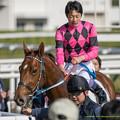 Photos: スマートグレイス「ユタカさんにペタペタしていただけるなんて嬉しいわね」【141116京都6R新馬】