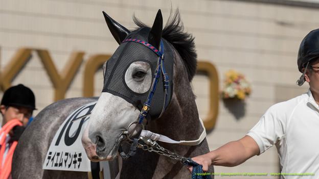 テイエムマンキチ「かわいい?いやそりゃかわいいですよ・・・ 」【141126京都5R新馬】