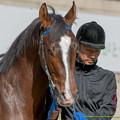 Photos: ?アニマルスピリッツ「おうおうこっちはやる気だよ?ええ?」【141126京都5R新馬】 #ジロリ馬