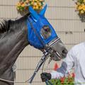 Photos: ?アムールサンライズ「けいばじょうってめんどうくさい」【141126京都5R新馬】 #ジロリ馬