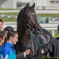 アンビシャス「ああ、写真とるの、はい、よろしくー」【141126京都5R新馬】