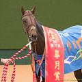 Photos: ドゥラメンテ「なかなかはじまらないねえ」【150419中山11R皐月賞】  #keiba