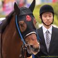 Photos: タガノエスプレッソ「ブラックタイド産駒としてはキタサンに負けないようにしないとですね~」【150419中山11R皐月賞】
