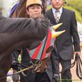 コメート「絶対写んない、写んないんだから!」【150419中山11R皐月賞】 #ジロリ馬