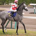 Photos: ダノンプラチナ(蛯名)「G1馬?そんなプライドは捨てました、挑戦者のつもりで頑張ります」クラリティスカイ「やる気だな~」【150419中山11R皐月賞】