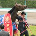 Photos: ドゥラメンテ「ああ、もう大暴れしてやる!」【150419中山11R】 #ジロリ馬