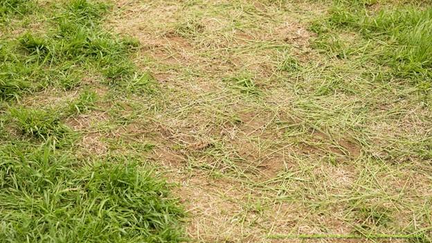 芝1800のスタート地点。完全に剥がれてる【150419中山馬場開放】