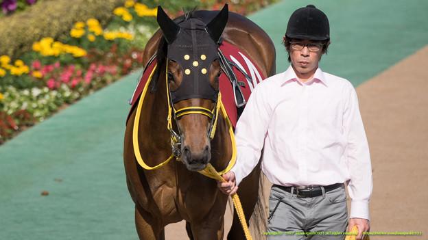 ?サダムブルーハワイ「え?新馬戦であって以来?はじめて東京来たけど、にぎやかですね」【150426東京11RフローラS】