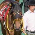 サダムブルーハワイ「どうでしょ、新馬戦のときよりオトナっぽくなってるかしら?」【150426東京11RフローラS】 #見つめうま