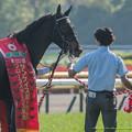 Photos: シングウィズジョイ「早く帰りたいな~…ってこんなとこ撮らないでよ!」【150426東京11RフローラS】 #ジロリ馬