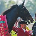 Photos: シングウィズジョイ「お母さん見ててくれるといいな~やだまだ撮ってる!」【150426東京11RフローラS】 #ジロリ馬