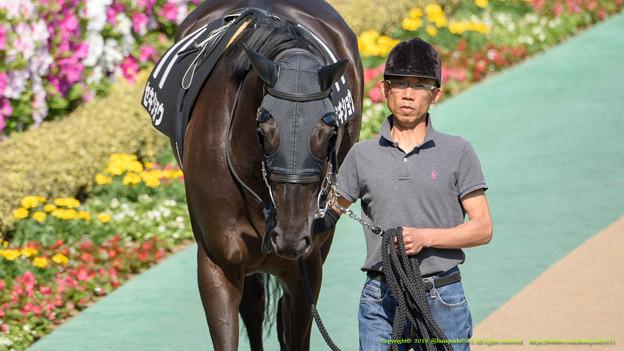 ?セキショウ「そっか…私も昨年の今日は福島牝馬走ってたっけ…いい旦那さんみつけるためにも頑張らないと~」【150426東京10R府中S】