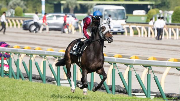 テルメディカラカラ(藤田)「名前に違わず歴史に残る名馬への第一歩だわ」【150503東京11RスイートピーS】