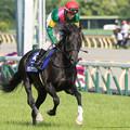Photos: タガノアザガル(松田)「松田さんトントントンと行きたいとこすねー」【150510東京11RNHKマイルC】