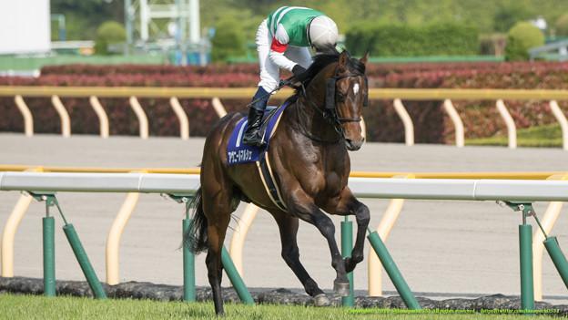 アヴニールマルシェ「いやいきます、いってきます」北村宏J「誘導馬のみなさんあざーっす」【150510東京11RNHKマイルC】