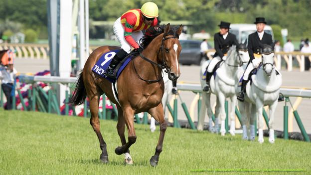 アルビアーノ(柴山)「全くオトコ馬ってやつは」マチカネリュウセイ「たくましいお嬢さんですね~」【150510東京11RNHKマイルC】