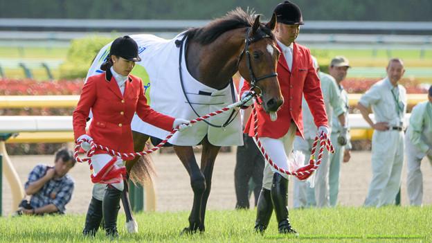 クラリティスカイ「しょうがない、我慢するか(ペロペロ」【150510東京11RNHKマイルC】 #ペロリ馬