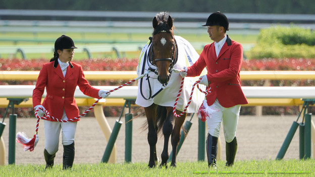 クラリティスカイ「お馬さん撮れっての~」【150510東京11RNHKマイルC】 #見つめうま