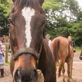 Photos: エイシンサンディ「元気かって?もうこっちも慣れたし、元気っすよ」【150523ホーストラスト和田牧場】 #見つめうま