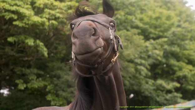 トップカミング「え?ニンジン持ってきてない!?」【150523ホーストラスト和田牧場】 #ジロリ馬