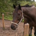ウィザードII(推定)「お馬さんもたくさん来て賑やかになったよ~」【150523ホーストラスト和田牧場】