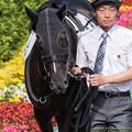 Photos: (4)グァンチャーレ「お客さん多いなぁ…サラサラヘアー見せられなくて残念です」【150531東京10R東京優駿】