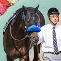 Photos: (7)サクラゴスペル「いいねえ、モーリスくん、自信に溢れてるね~」【150607東京11R安田記念】