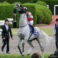 写真: ゴールドシップ「うおおおおお!!!漲ってきたああ!!!」【150628阪神11R宝塚記念】 #ジロリ馬