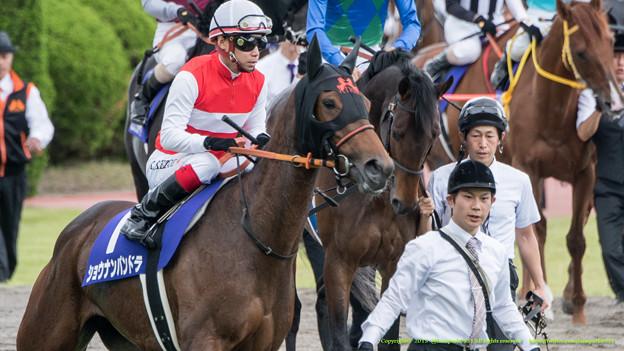 ショウナンパンドラ「オトコばかりのレースはおっかないわね~」【150628阪神11R宝塚記念】